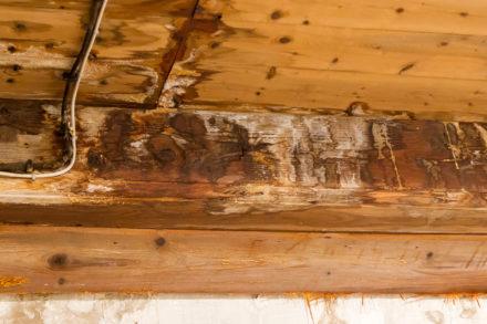 wood-repair-2